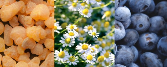 The Magic of Boswellia, Chamomile and Blueberries for Muscular Skeletal Pain